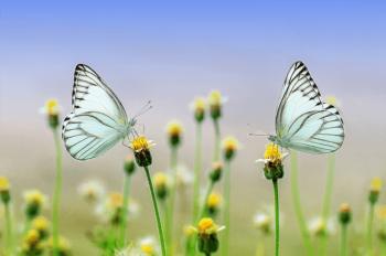 Counseling relazionale e spirituale